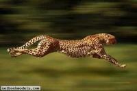 скачать советник бесплатно gepard